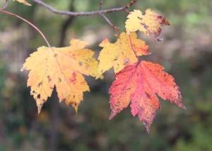 01 close leaves